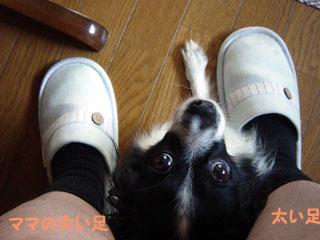 足の間のさくら.jpg